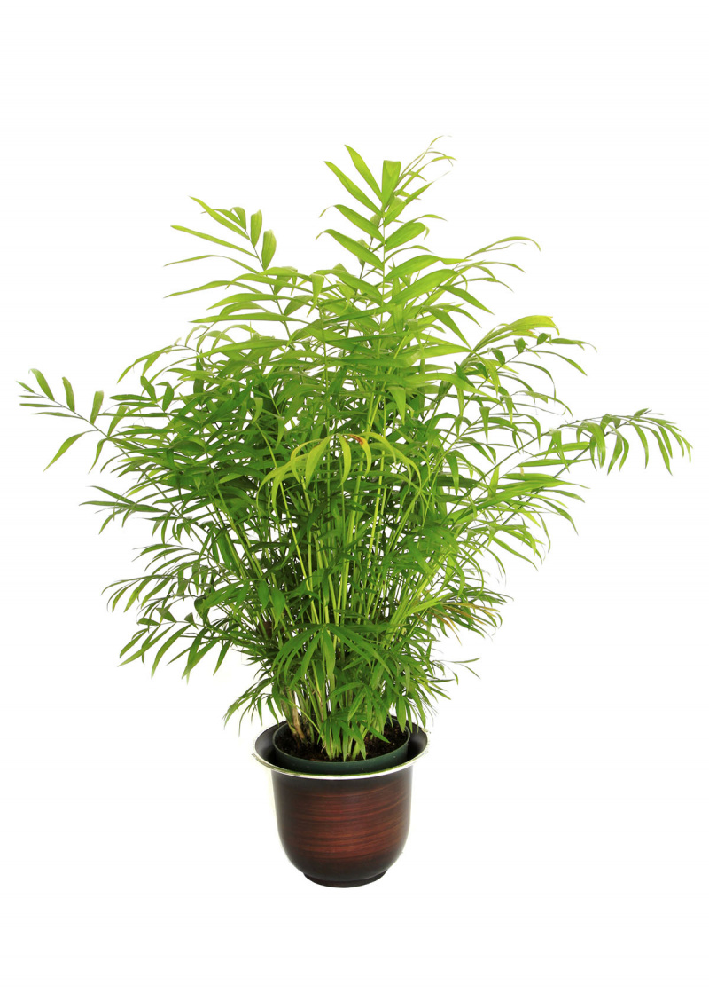 Hardy Tropical Plants in Container Image